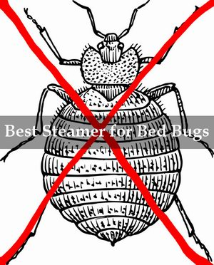 best steamer for bed bugs reviews