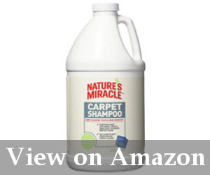 4 Best Carpet Cleaning Solution For Pet Stains 2019 Updated