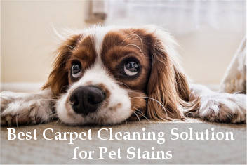 best carpet cleaning solution for pet stains reviews